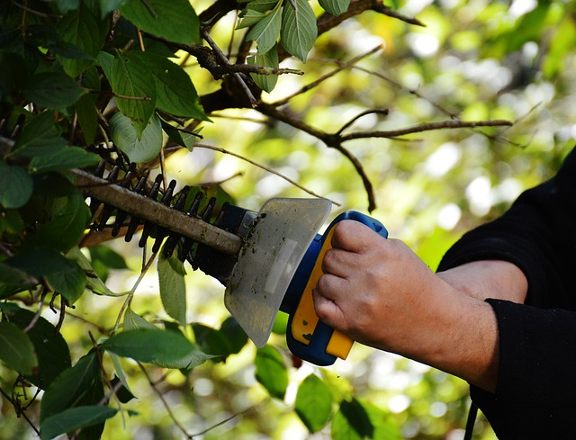 Best Hedge Trimmers Review and Guide
